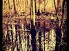 Bildbearbeitung mit der Camera+ App